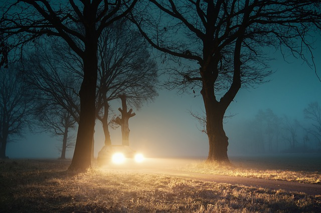 auto mezi stromy
