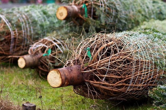 řezané stromky